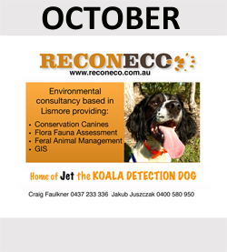 Reconeco - conservation services with Jet the koala scat detection dog!