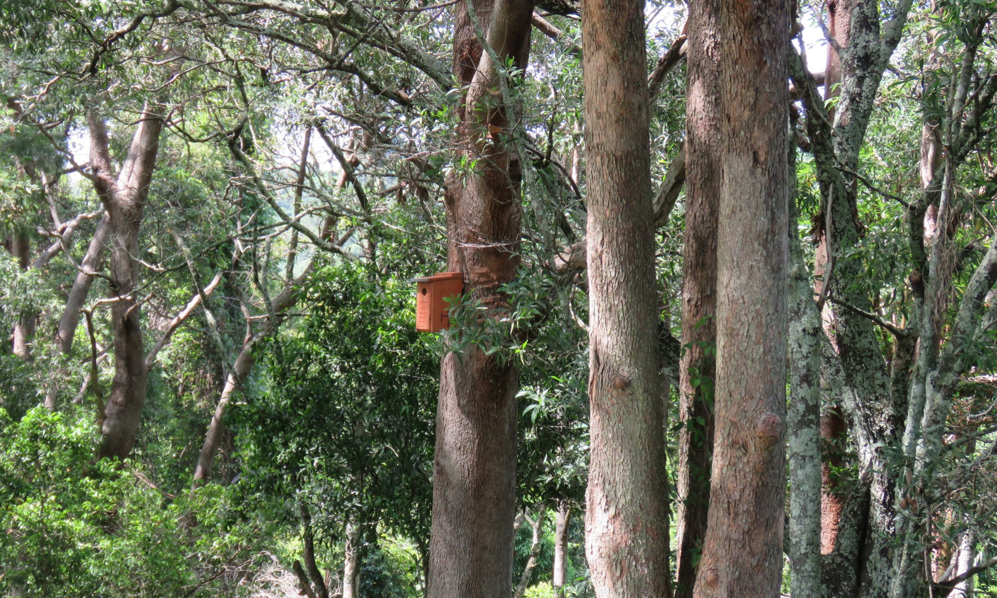 Little lorikeet nesting box installed at Koala Gardens