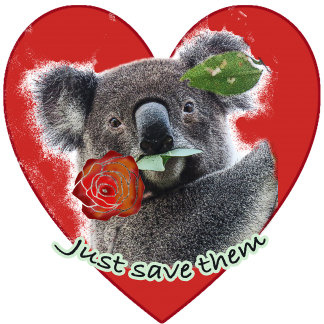 Jordan the wild koala from Koala Gardens brings Valentine's day greetings