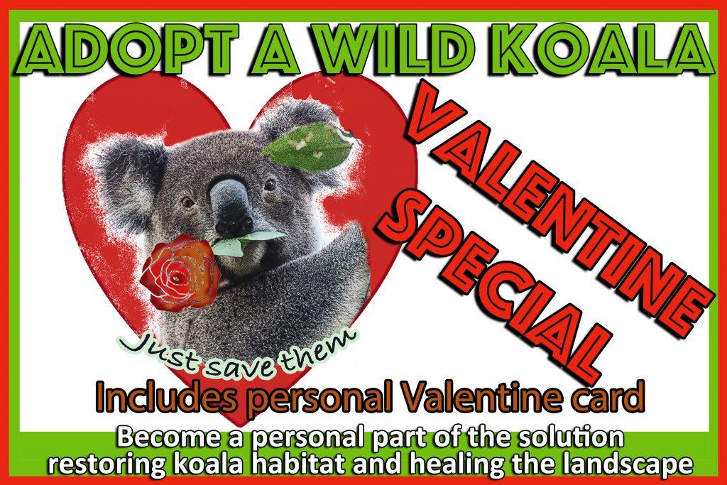 Adopt a wild koala for valentines day