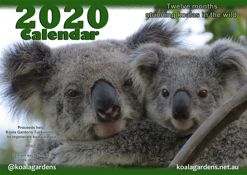Cover of the 2020 Koala Gardens calendar showing Mist and her joey Krissy